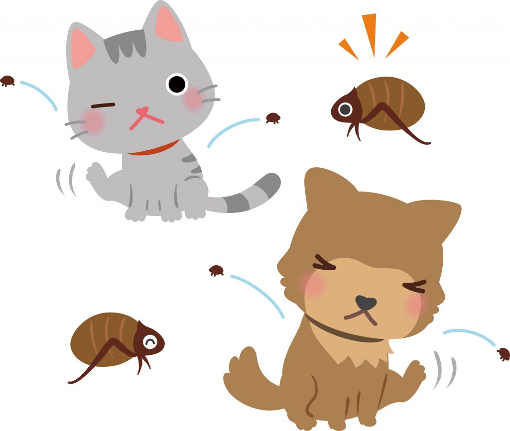 Tick and Flea Prevention