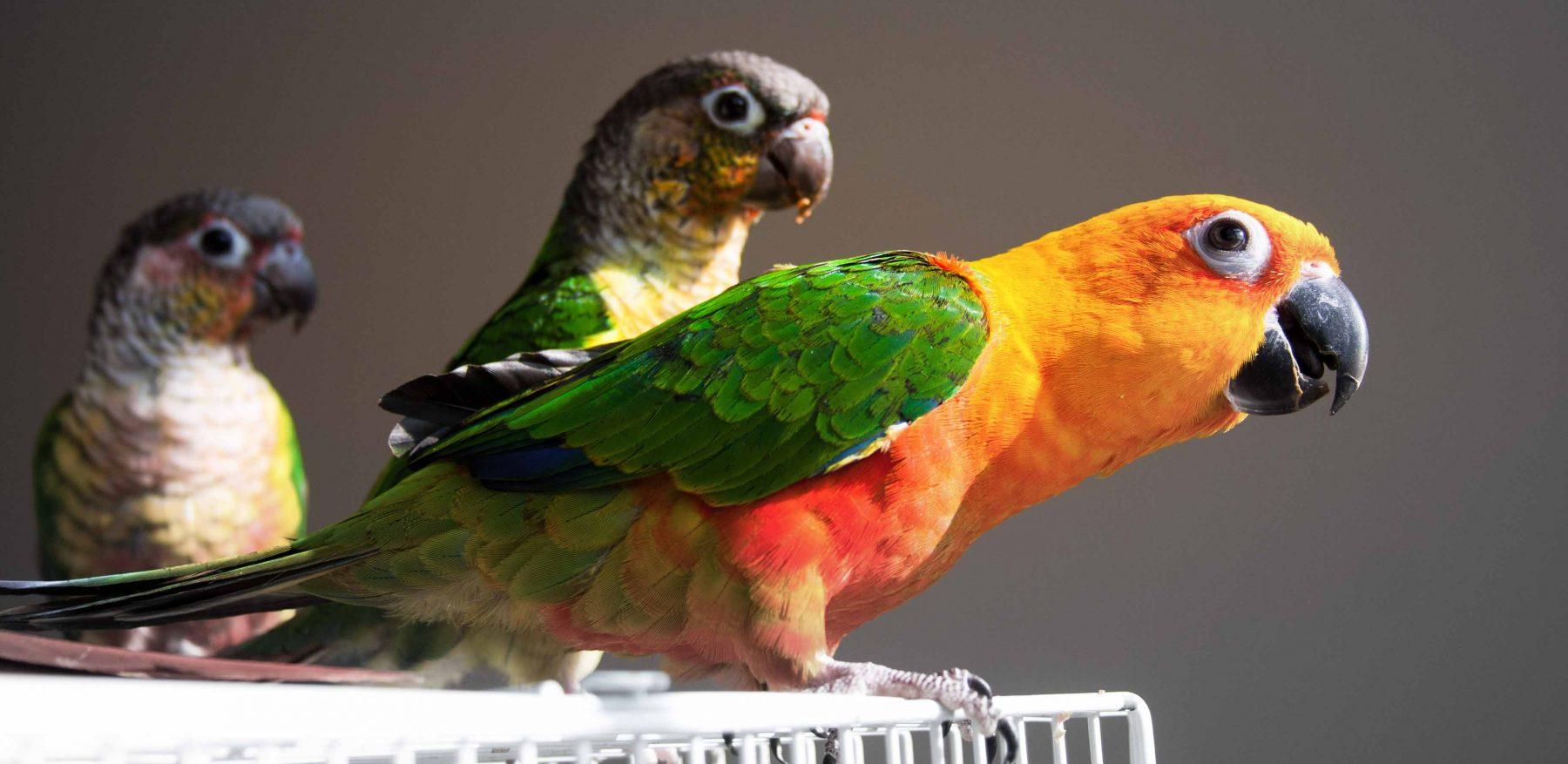 bird-services