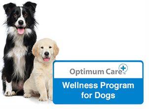 optimum-care-dog