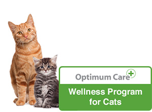 wellness-cat