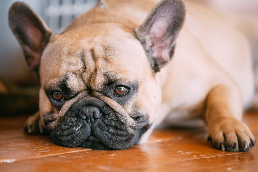 coughing-dog-blog