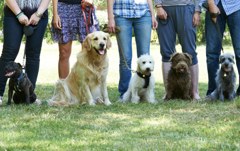 Pros & Cons of dog parks.