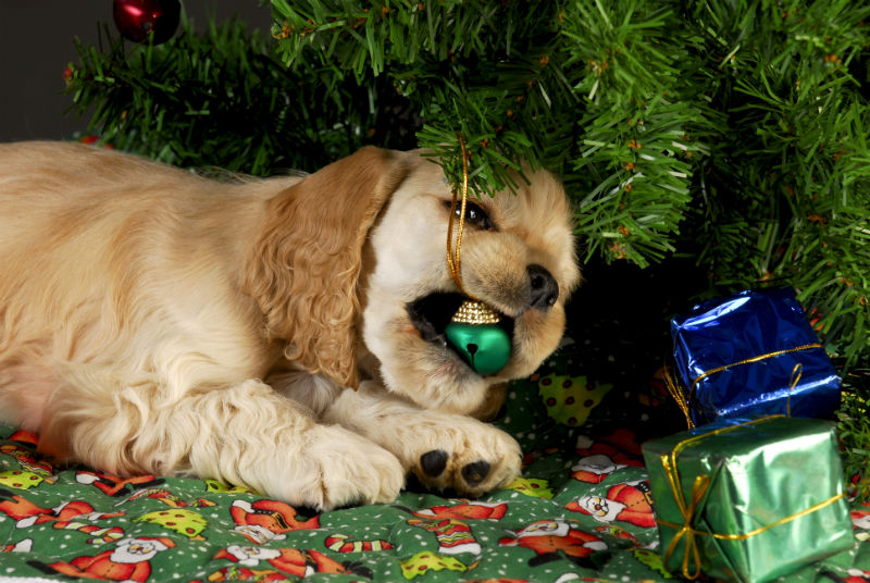 Christmas Dangers for Your Pets