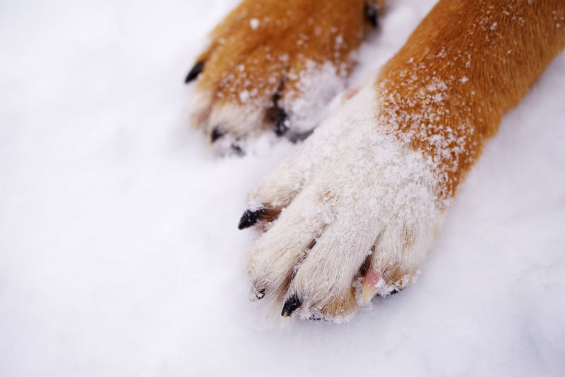 Winter-Proofing Your Pets
