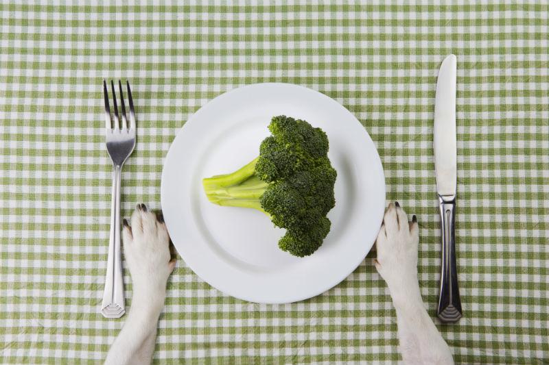 pet diet